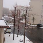 雪のため病院はキャンセル