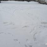 雪とお土産